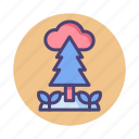 environment, forest, jungle, nature, pine tree, tree