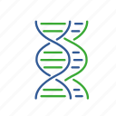 comparative, dna, fusion, gene, genomic, informatics, synthesis icon