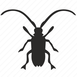 asian, beatle, beetle, insect, longhorned icon