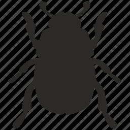 beatle, beetle, bug, insect icon