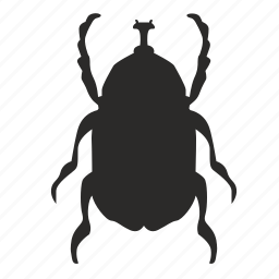 beatle, bug, insect, scarab icon
