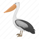 animal, bird, feathered, pelican, wild icon