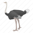 animal, camel-bird, feathered, ostrich, wild, bird