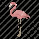 animal, wild, bird, pink flamingo, feathered