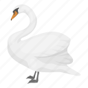 animal, swan, wild, bird, feathered
