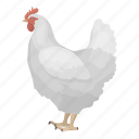 animal, bird, chicken, feathered, pet, wild icon