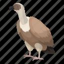 animal, bird, feathered, predator, vulture, wild icon