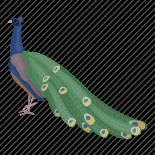 animal, bird, feathered, peacock, peafowl, wild icon