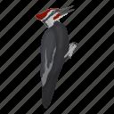 animal, feathered, woodpecker, wild, bird, pecker
