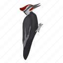animal, bird, feathered, pecker, wild, woodpecker icon