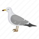 animal, bird, feathered, gull, seagull, wild icon
