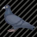 animal, feathered, pigeon, wild, bird, dove
