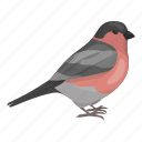 animal, bird, bullfinch, feathered, wild icon