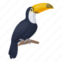 animal, toucan, bird, wild, feathered