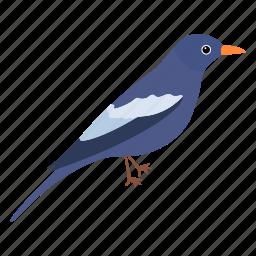 bird, colorful bird, flat bird, fly, sky, tropical bird, wing icon