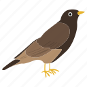 fly, colorful bird, sky, bird, flat bird, tropical bird, wing