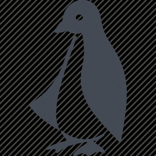 beak, bird, birds, penguin icon