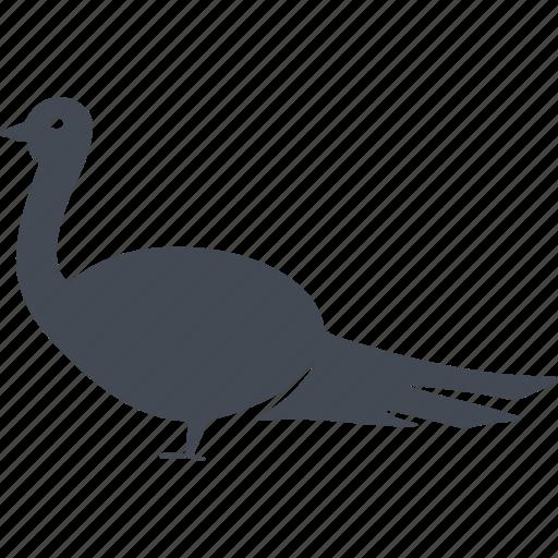 bird, birds, feathers, nature, tail icon