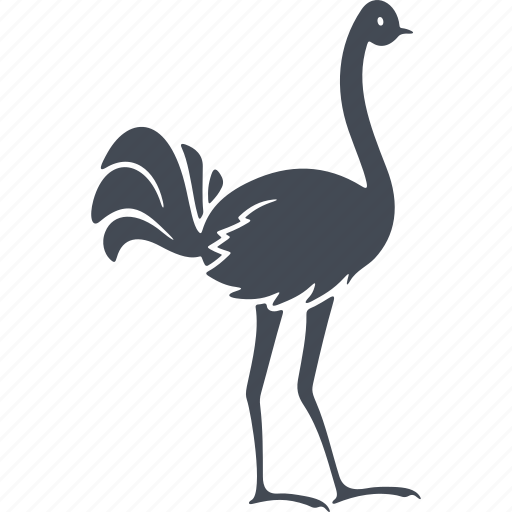 bird, birds, nature, neck, ostrich, wings icon