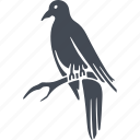 birds, bird, nature, ecology