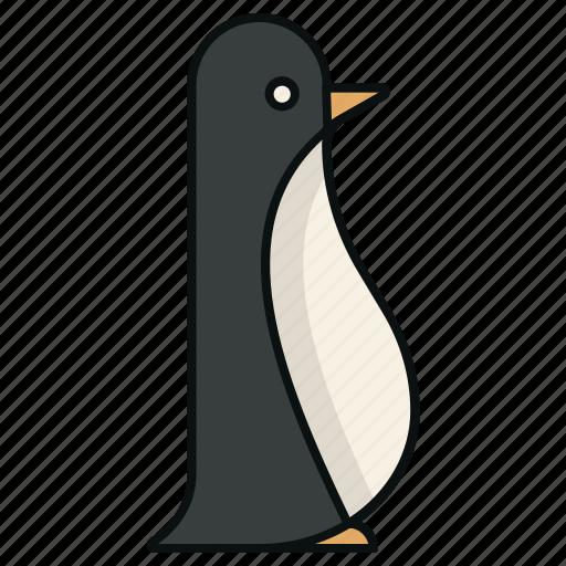 antartic, arctic, bird, flightless-birds, penguin icon