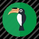hornbill, bird, forest, wild