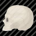 cranium, dark, human, magic, skull, white icon