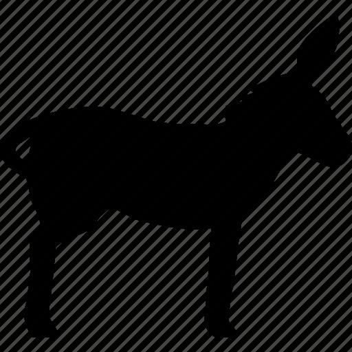 animal, animals, domestic, donkey, pet, stupid, torrent icon