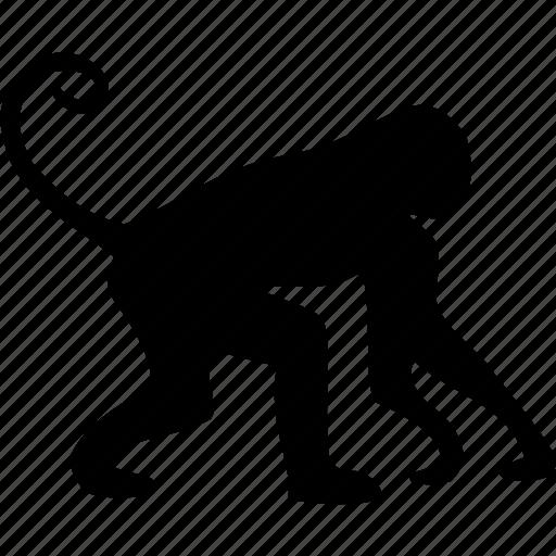 african, animal, animals, marmoset, monkey, small man, wild animal icon