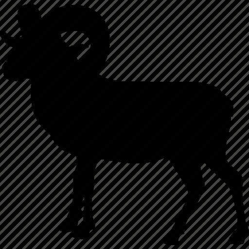 animal, animals, cattle, hard head, ibex, ram, stupid icon