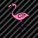 animal, bird, exotic, flamingo, jungle, pink, tropical
