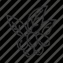 brazilian, miracle, fruit, exotic, jojoba, botany, plant icon