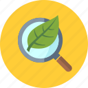 magnifier, magnifying glass, organic seo icon