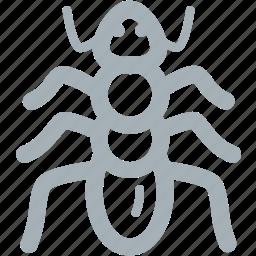 ant, ants, bug, bugs icon