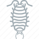 bug, bugs, lice, woodlice icon