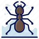 ant, bug, insect, wildlife