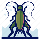 bug, grasshopper, insect, wildlife icon