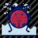 bug, insect, ladybug, wildlife