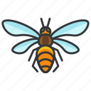 bee, bug, insect, nature, wildlife icon