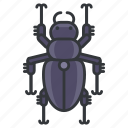 beetle, bug, garden, nature, wildlife icon