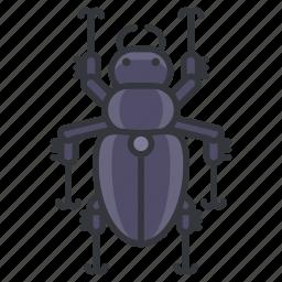 beetle, bug, garden, nature, wildlife icon