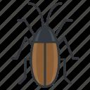 wildlife, vermin, bug, cockroach, nature icon