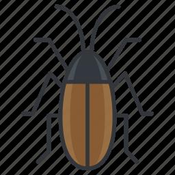bug, cockroach, nature, vermin, wildlife icon