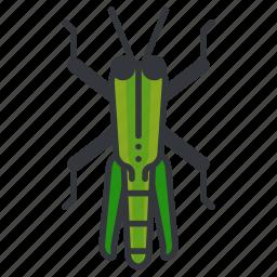 bug, garden, grass, grasshopper, nature, wildlife icon
