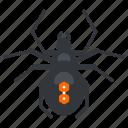 bug, halloween, nature, spider, wildlife