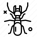 animal, arthropod, bug4, termite icon
