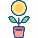 flower, growth, money