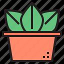 cactus, cacti, flower, plant, tree