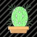 cactus, nature, pot