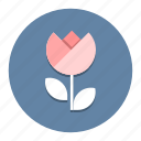 camera, closeshot, closeup, flower, photography, picture, tulip icon